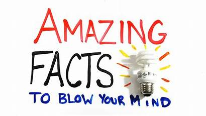 Facts Interesting Amazing Fun Notebook Justice American