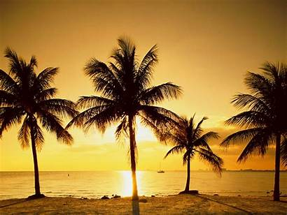 Palm Trees Wallpapers Backgrounds Tree Background Sunset
