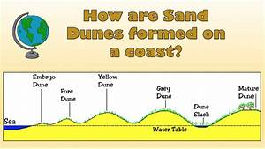 How Are Sand Dunes Formed On A Coast  - Labelled Diagram And Explanation