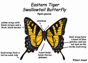 Butterfly Diagram Pictures To Pin On Pinterest