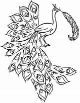 Peacock Coloring Feather Feathers Outline Printable Peacocks Drawing Simple Indian Colorful Template Colouring Clipart Draw Getdrawings Painting Amp Flower sketch template