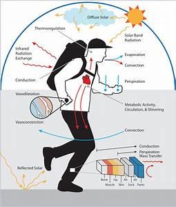Homeostasis  Thermoregulation