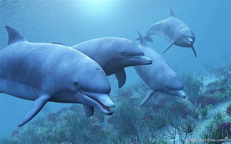 Dolphin Animated Wallpaper - free animated dolphin wallpaper desktop wallpapersafari