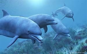 Free Animated Dolphin Wallpaper Desktop - WallpaperSafari