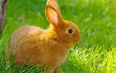 Rabbit Animals 1080 Nature Wallpapers Grass Desktop