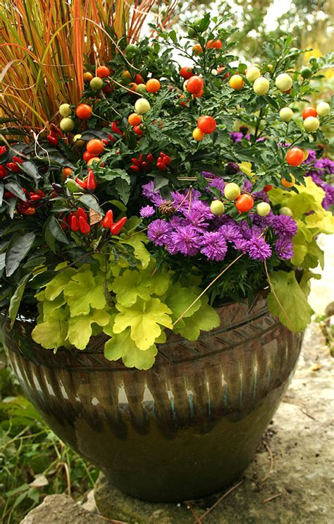 Grow A 1% Fall Container Garden On A 99% Gardener Budget