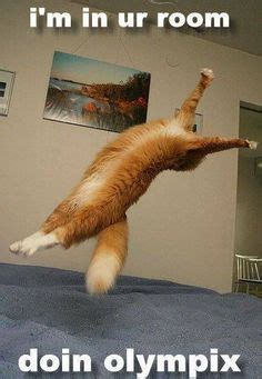 cat gymnastics 1000 images about animal gymnastics on