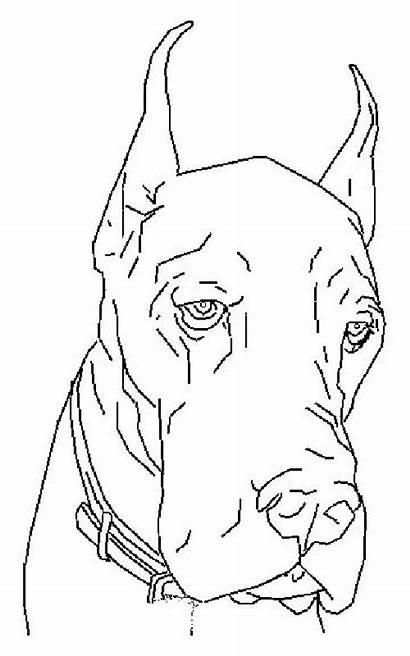 Coloring Dog Dogs Dane Danes Canine Adult
