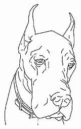 Coloring Dog Dane Dogs Adult Canine Animal Danes Lovesmag Colouring Drawings sketch template
