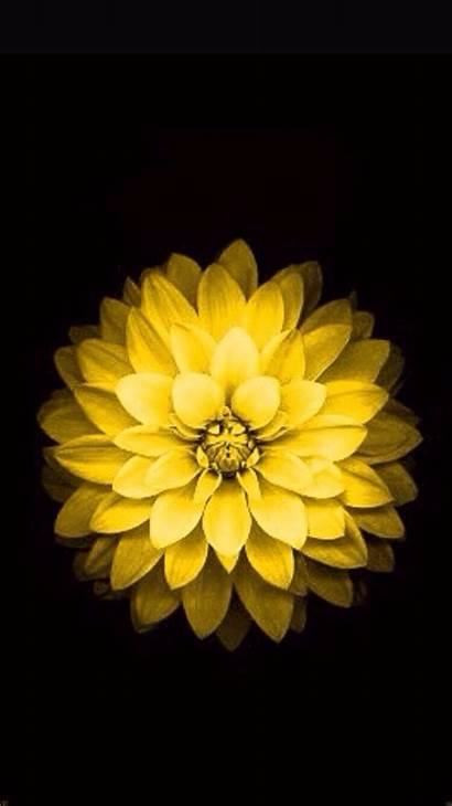 Iphone Flower Yellow Flowers Apple Wallpapers Website