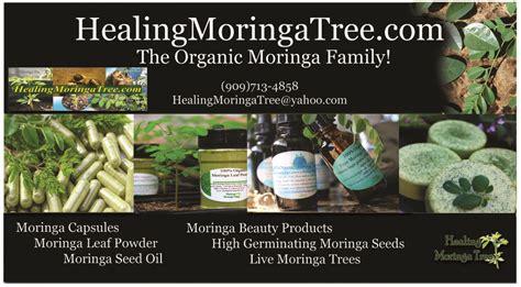 brochures  cards moringa trees  sale  mecbd