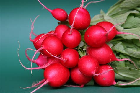 what is radish radishes wild roots
