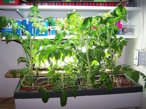 Growing Plants Indoors With Hydroponics