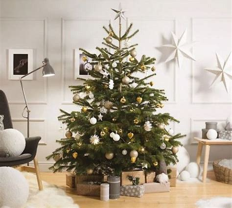 where to buy a christmas tree near me best places to buy a tree near birmingham birmingham live
