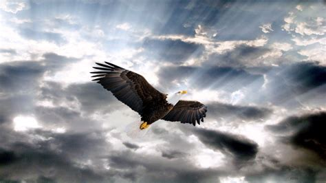 Animated Eagle Wallpaper - eagle hd wallpaper and background image 1920x1080