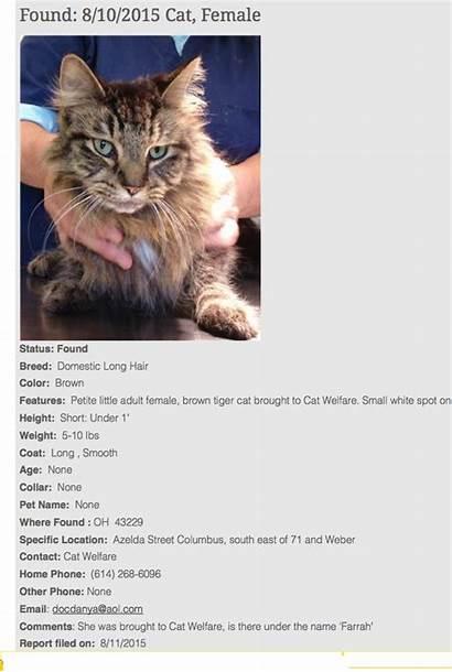 Cat Lost Pet Found Fbi Report Reports