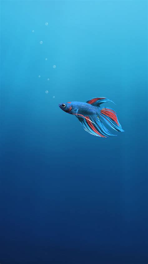 underwater  fish  wallpapers hd wallpapers id