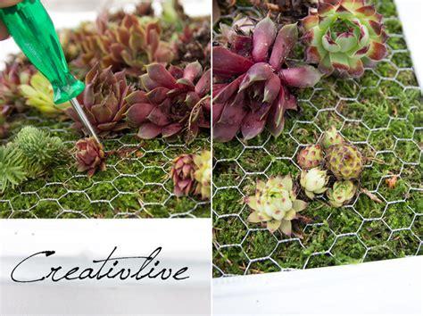 welche kräuter kann ich zusammen pflanzen diy mini wandbegr 252 nung creativlive