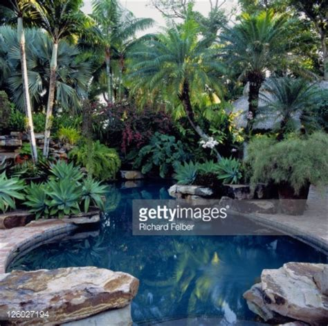 swimming pool surrounded by tropical plants miami florida