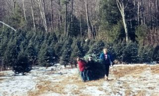 christmas trees for sale at balsam ridge christmas tree farm