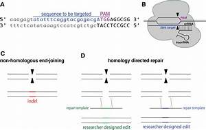 Molecular Biology At The Cutting Edge  A Review On Crispr