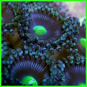 monochrome tank The Reef Tank