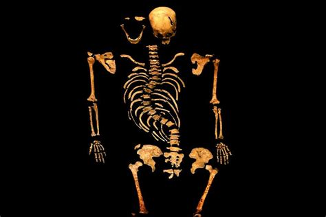 richard iii images richard iii skeleton hd wallpaper