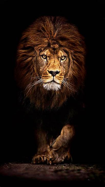 Lion Android Wallpapers Mufasa Tablet Phones
