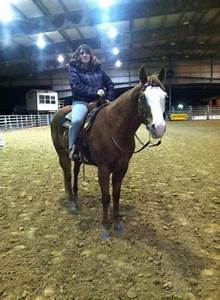Should I Have To Disclose My Size? - The Horse Forum