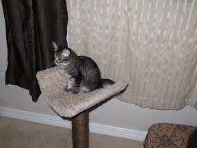 43 Best My Maine Coon Cats Images On Pinterest