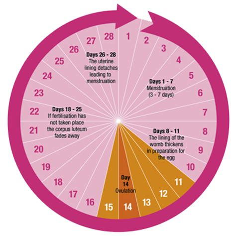Wanita Hamil Haid Menstrual Cycle Calendar Chart Calendar Template 2016