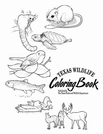 Texas Coloring Wildlife Pages History Portal Ark