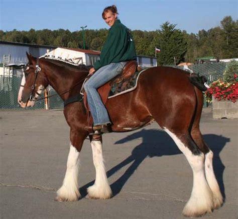 draft riding western horse horses demonstration regional august