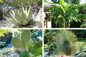 Plantes Exotiques Rustiques : cultiver des plantes exotiques en climat froid d tente ~ Melissatoandfro.com Idées de Décoration