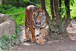 World Top 10 Most Beautiful Animals