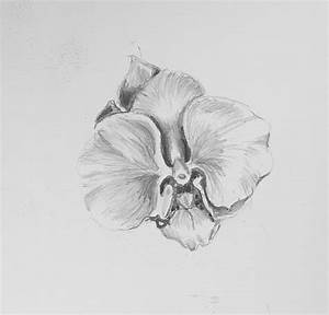 gousicteco: Orchid Drawing Images