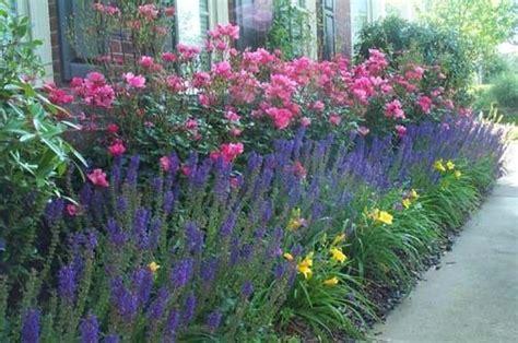 betty prior  night salvia outdoor gardens garden