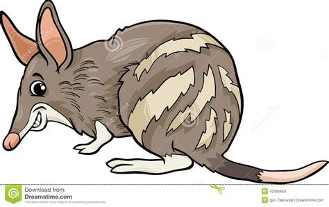 Cartoon : Bandicoot Animal Cartoon Illustration Stock Vector