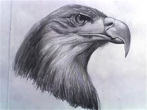 eagles drawings   eagle drawing  pinterest