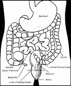 Digestive Clipart