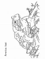 Coloring Toad Pages American Goldfinch Printable Improve Features Willow Designlooter Print Getcolorings Template 04kb 932px sketch template