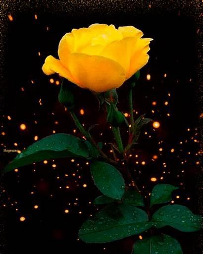 Flores Gifs Hermosos