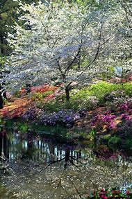 Beautiful Nature Spring Colors