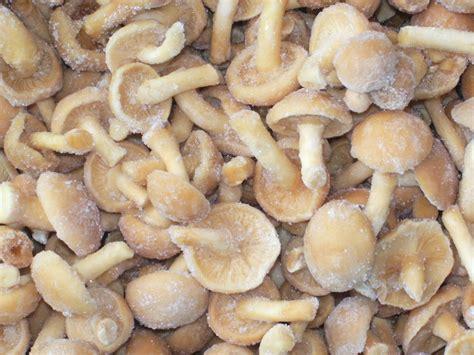 freezing mushrooms top 28 freeze mushrooms top 10 ways and steps how to freeze mushrooms top inspired freeze
