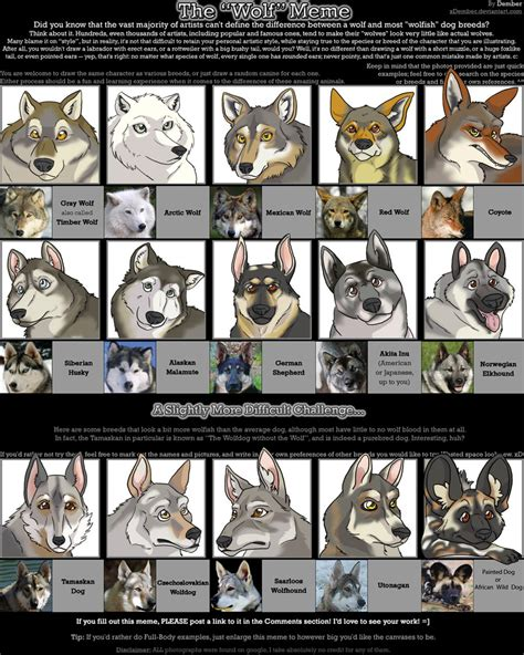 Angry Wolf Meme - angry wolf meme blank www imgkid com the image kid has it