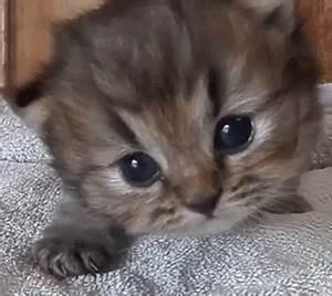 Kitten Meow GIF - Kitten Meow Tired - Discover & Share GIFs