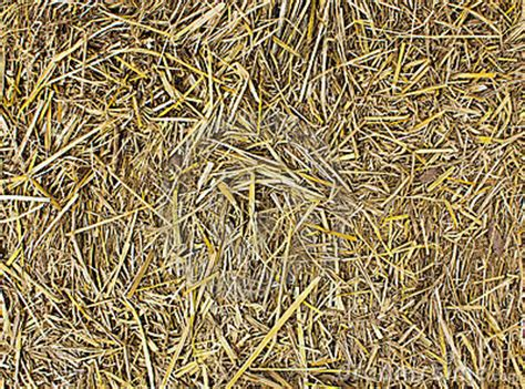 hay seamless background royalty  stock image image