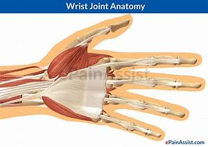 Wrist Tendons And Ligaments Anatomy