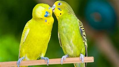 Birds Lovely Wallpapers 1080 1920a Amazing Wallpapertag