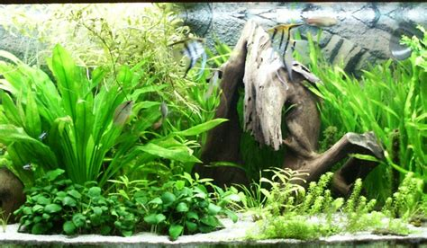 liter aquarium welche fische aquarium fische